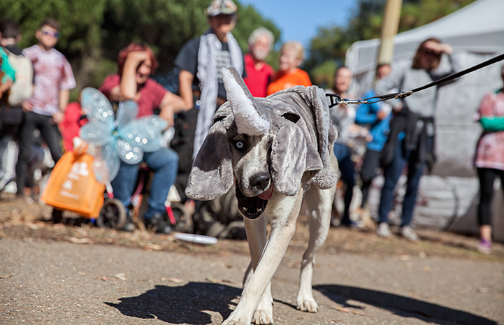 Dog wearing an elephant costume at Strut Your Mutt