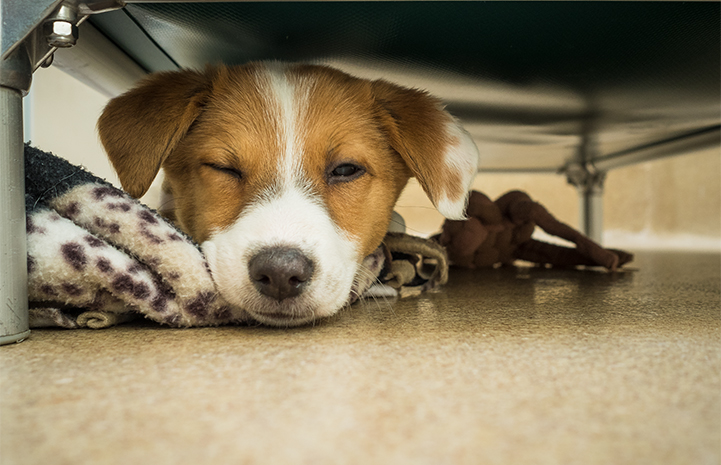 Puppy sleeping under a table