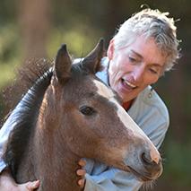Baby Horse Photos