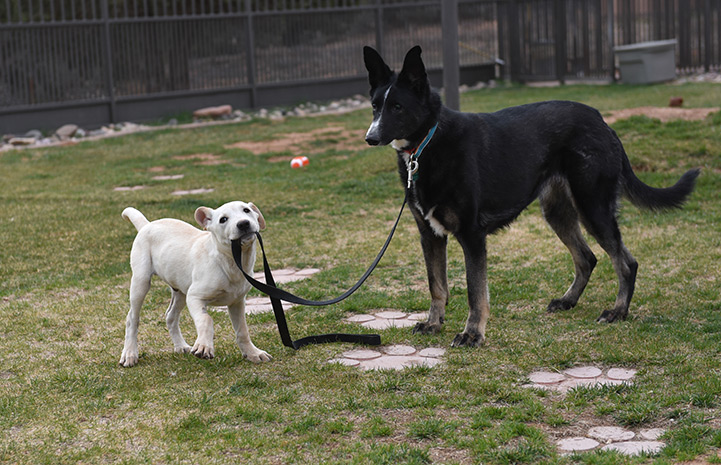 A partially blind and deaf shepherd mix, took the scrappy puppy under her wing