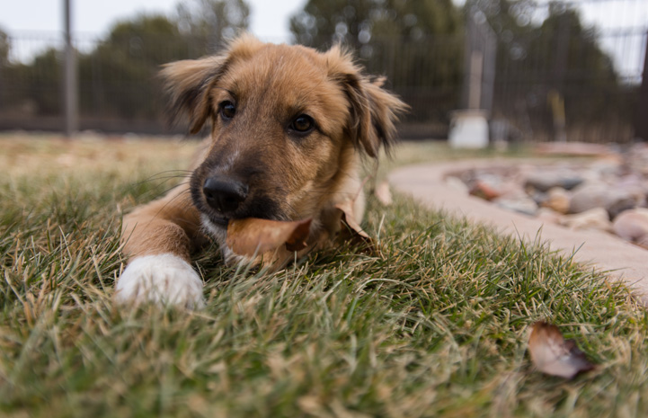 Chandler the once-abandoned pup quickly became a star pupil in puppy preschool