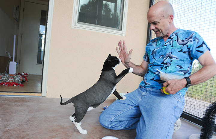 Mozart the cat giving Dr. Frank, a behavioral vet, a high five