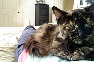 "Fuzzy the senior tortoiseshell cat is brimming with ""tortitude."""
