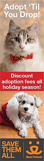 Adopt 'til you drop! holiday adoption promotion