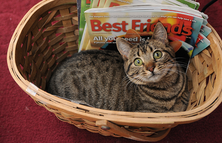 Annette the cat in a basket with the Best Friends magazine