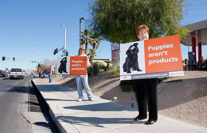 People peacefully protesting a pet store