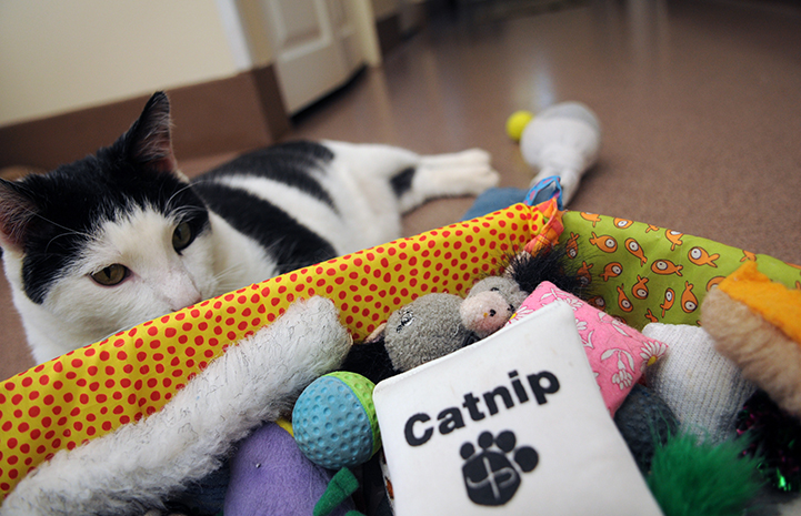 I resolve to use catnip in moderation.