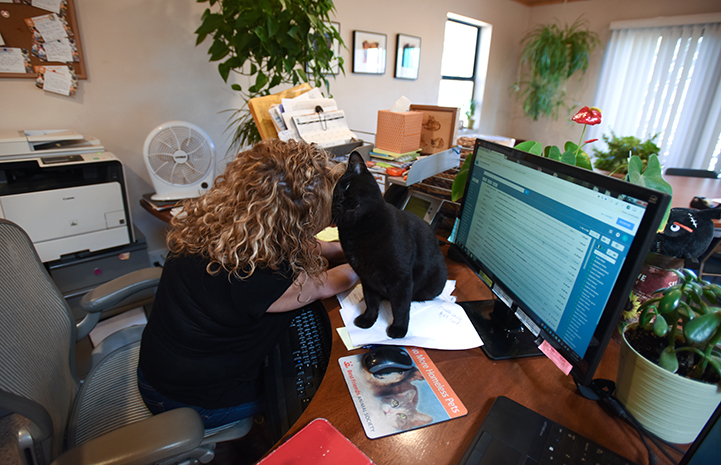 Chad the feline spends every Monday in the office of the Best Friends animal care director