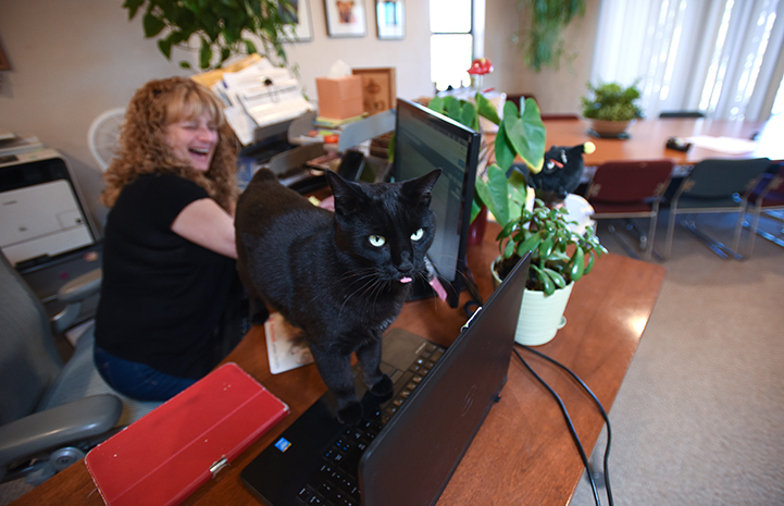 Chad the cat hangs out with executive assistant Laura Rethoret while she's working