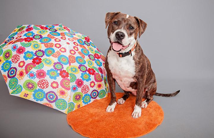 A little rain isn't going to bring me down. I'm prepared!