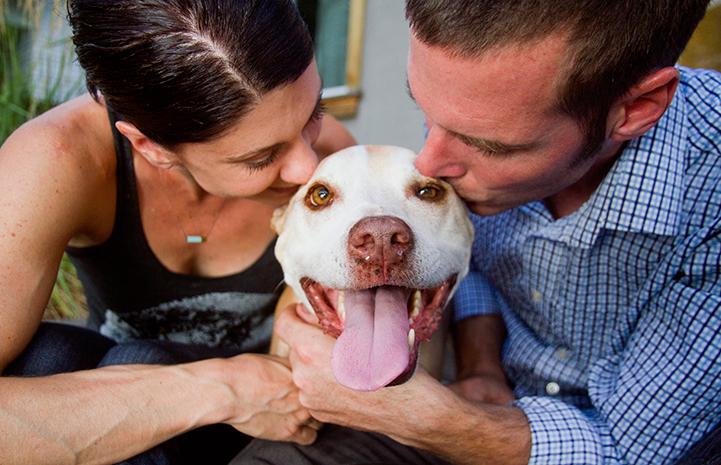 Couple kissing pit bull terrier dog