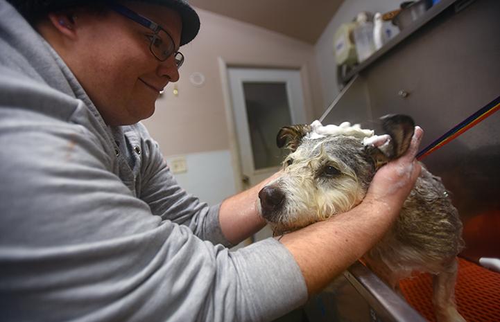 Nochi the dog enjoys his baths