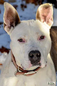 Batman, a pit bull terrier leaves behind a legacy of love