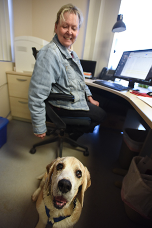 Gus the beagle loves to spend time as an office dog