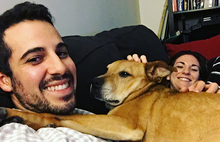 Chance the German shepherd mix snuggling on the couch with his new family