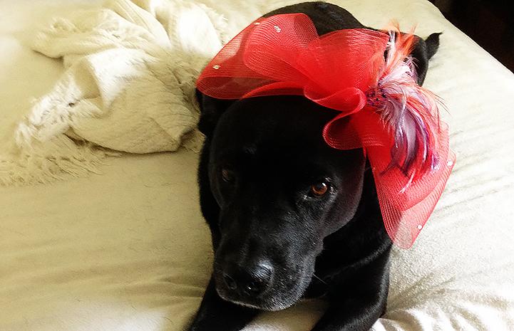 Dakota the black dog for Best Friends Day