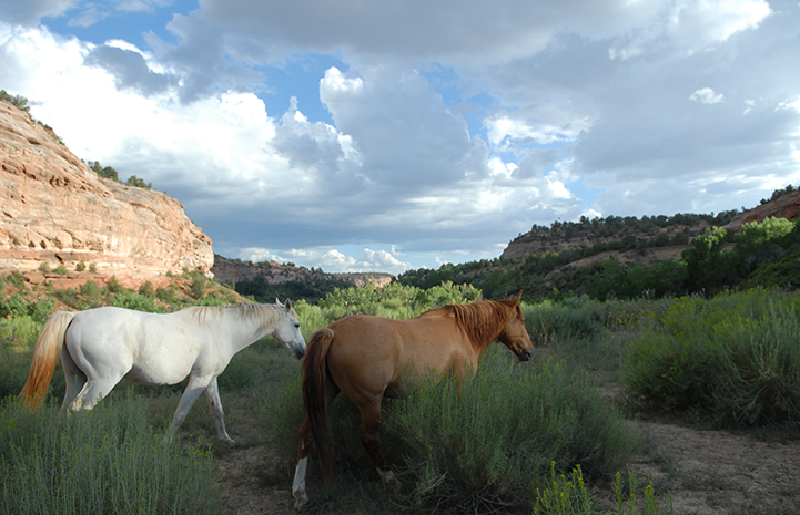 Best Friends Day 2016: Pair of horses in a beautiful landscape