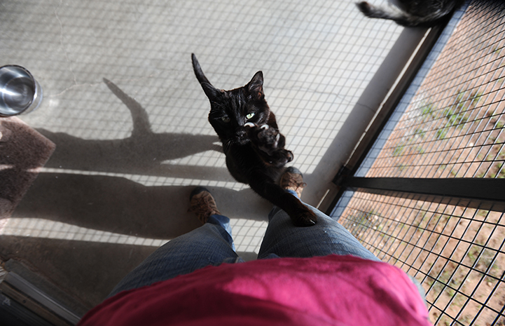 Butch the black cat is available for adoption