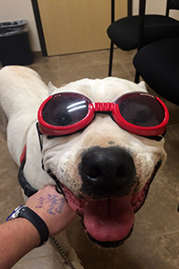 Ralph has come to enjoy the laser therapy treatments he gets
