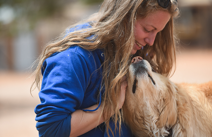 Bodin the golden retriever mix is adorably sweet and huggable, just like a teddy bear