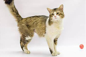 Raymond the cat at the SPCA of Brazoria County