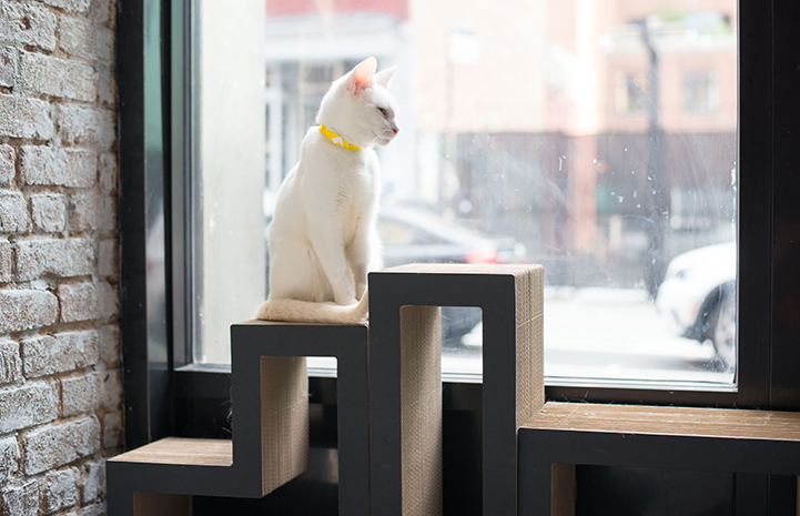 Feline personalities shine at Little Lions Cafe in New York