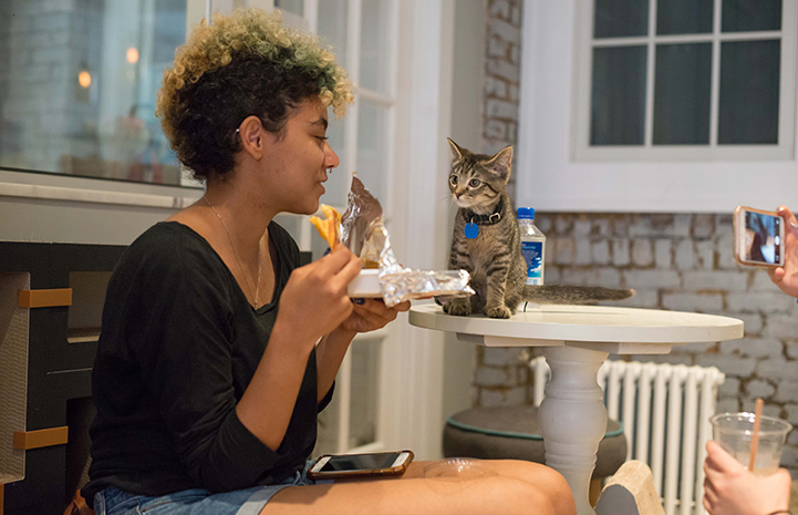 Woman eating and kitten begging for a bite