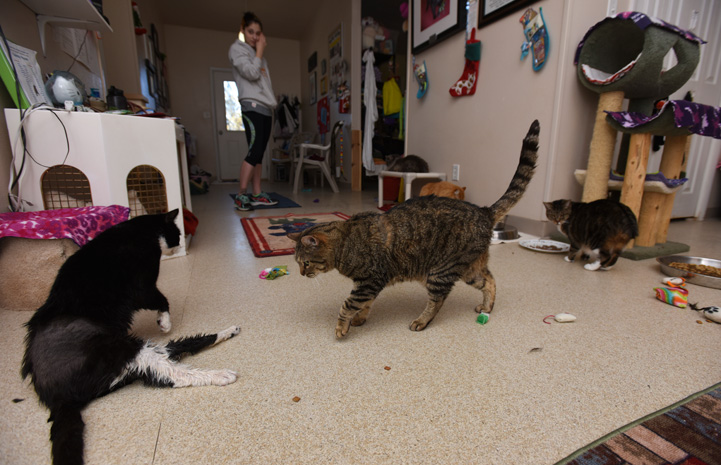 Spud the cat finds joy every day, including with his feline friends