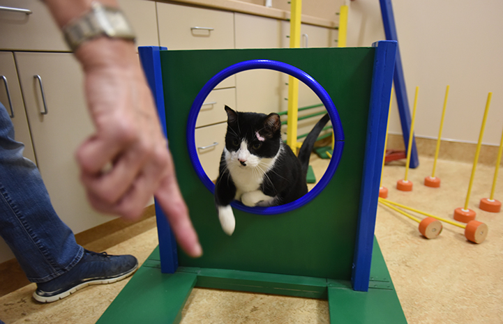 Lightfoot excels at kitty agility