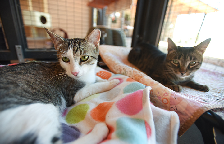Feline buddies, Nicky and Oleander