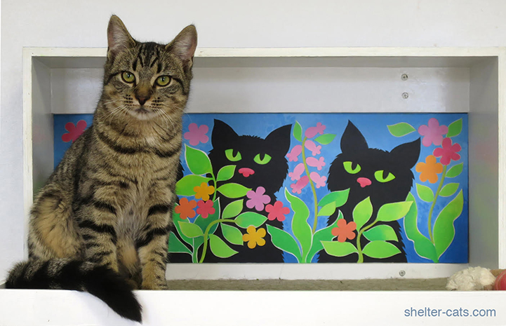 "This shelter cat approves of the new ""catified"" area"