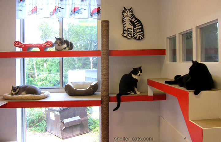 The new shelter remodel enhances the cats' environment, reducing their stress and keeping them more active and engaged