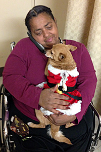 When Foxi the Chihuahua arrives at the senior rehabilitation center, she immediately turns heads
