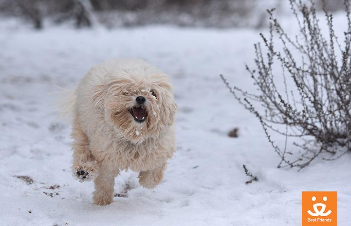 Feliz had a good romp in the cold white stuff.