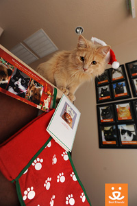 """Jordy got to wear a Santa suit and play """"Santa Paws"""""""