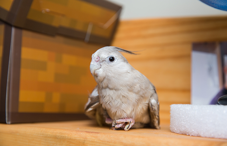 Birdie was born splay legged