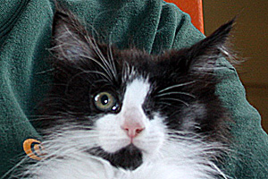 Petey the kitten's true personality emerged after his upper respiratory infection healed and his eye was removed
