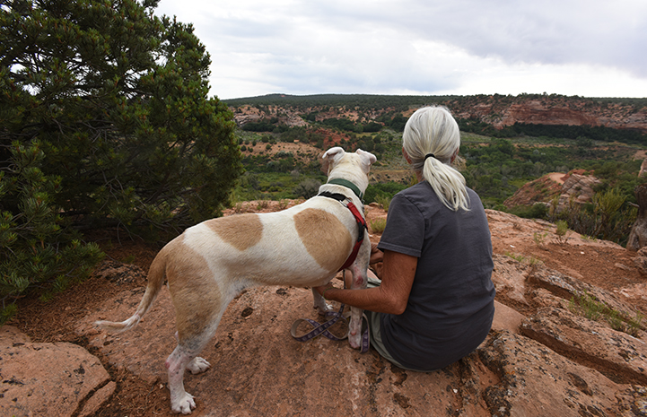 Destiny the pit bull terrier mix who has lupus with Deb, looking out at the scenery