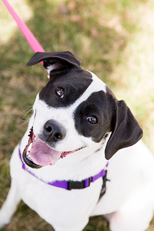 Stella, a one-year-old dog from the Best Friends Pet Adoption Center in Salt Lake City