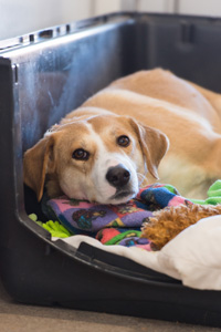 Kay the dog who was rescued from a hoarding situation wouldn't crawl out of her open crate