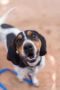 Whistler gets help overcoming a dog neurological disorder