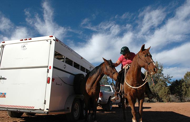 Horses Felix and Firebug