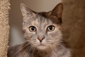 Wampum the FIV-positive cat