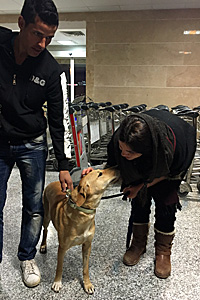 Kamy, a German shepherd mix originally from Iran, now has a loving home in the United States