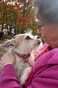 Rainbow the senior terrier mix found the perfect adopter