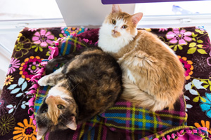 Iowa and Indiana, both cats with FeLV, get special care at Cat World