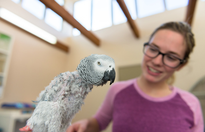 Gregory the African grey parrot with Sierra