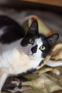 Bill, a cat with feline cerebellar hypoplasia