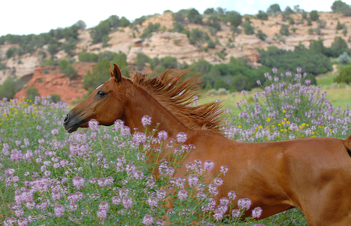 Alex the horse in flowers