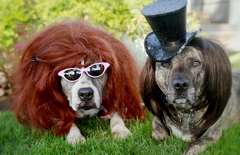 Rockstar Pit Bull Terriers